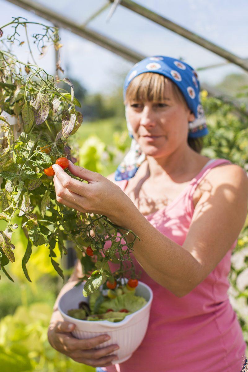 Emilia Linderholm som plockar tomater.